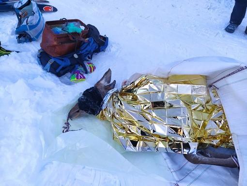 Troppo grave la cerva recuperata in alta Valle Varaita: è deceduta dopo una giornata di cure al Cras di Bernezzo