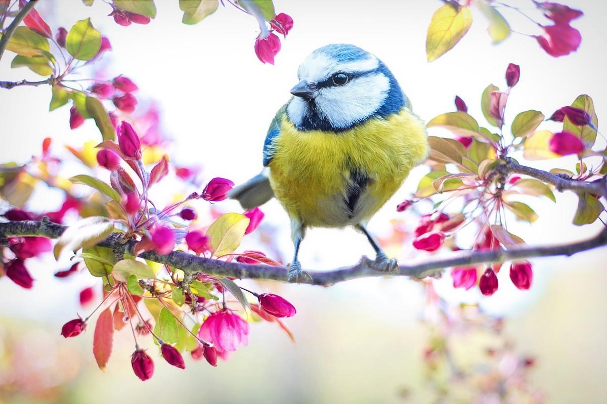 Nido Di Tortore Sul Balcone iorestoacasa: fotografare da casa gli uccelli liberi in