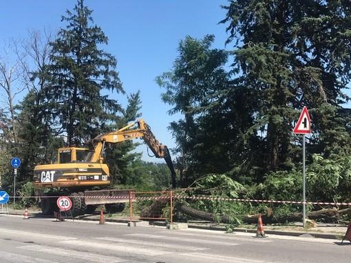 Cuneo: quale criterio è stato seguito per abbattere gli alberi in corso Marconi?