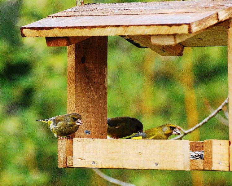La lipu di cuneo organizza il giardino d inverno - Casette per uccellini da costruire ...