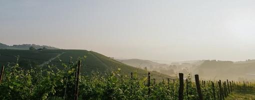 Il Terre Alfieri 'conquista' la Docg: quattro comuni del Roero tra gli 11 del disciplinare