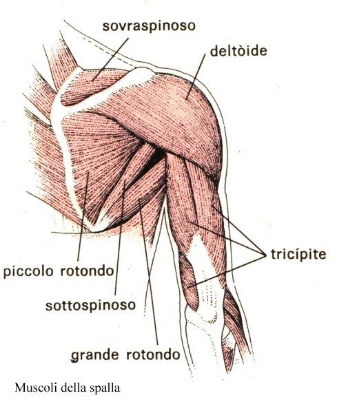 Serie di esercizi per un reparto di petto di spina dorsale
