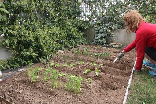 Un piccolo orto a uso famigliare ricavato nell'area verde dell'abitazione