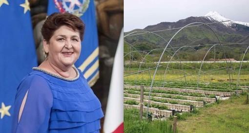 La nuova ministra Teresa Bellanova (foto scaricata dal profilo Facebook) e alcuni terreni coltivati con la Bisalta sullo sfondo