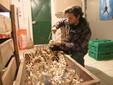 Matteo impegnato nella preparazione di una treccia dell'aglio di Caraglio
