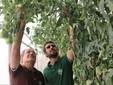 Si controlla la maturazione dei pomodori