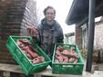 La batata: una coltura che sta dando buoni risultati