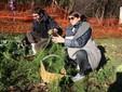 Alessandro e Valentina impegnati nella raccolta dei finocchi