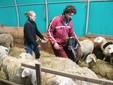 Sara e Matteo tra le pecore e i montoni di Razza Sambucana