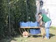 Lele con le cassette per la raccolta dei pomodori