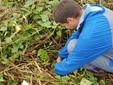 Altro punto di scavo per la raccolta delle batate