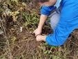 Mauro scava a mano nel terreno per raccogliere le batate