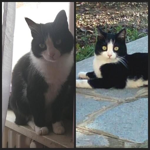 Smarrita a Sommariva Bosco una gattina di quattro anni