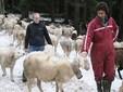 Sara e Matteo tra le pecore
