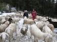 Sara e Matteo con le pecore nei terreni di Monserrato