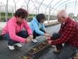 Al lavoro tra i lamponi fuori suolo piantati a inizio aprile