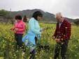 Nel campo coltivato a rape da interrare per la pratica del sovescio. Sullo sfondo la Bisalta