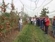La visita alle piante della Mela Tessa® nel Centro sperimentale Agrion