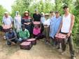 La famiglia Serra con i dipendenti stagionali nei campi di fagioli