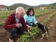 Andrea e Cinzia con il cane Soldino nel campo di lamponi Adelita