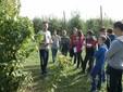 Gli studenti dell'Agrario al lavoro nell'azienda sperimentale di Madonna dell'Olmo