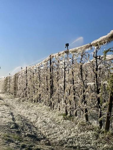 Le gravi conseguenze causate dalla gelata di questa notte in alcuni scatti realizzati dai tecnici della Confederazione Italiana Agricoltori