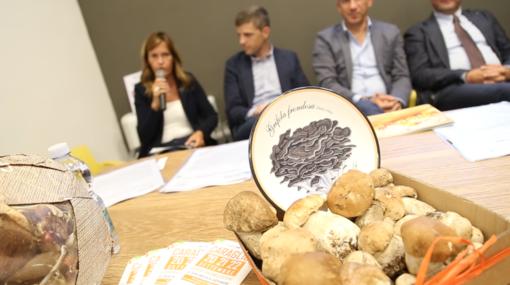 Si alza il sipario a Ceva per la 58^ Mostra del Fungo con la Rassegna Micologica Nazionale e la Mostra Mercato Nazionale (VIDEO)