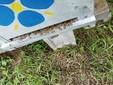 Ancora api morte sul predellino di volo