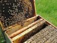 Alveare senza scorte di miele