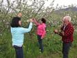 La famiglia Garro nel frutteto di mele Renette
