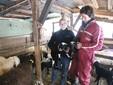 Sara e Matteo con due agnelli nati sette giorni prima