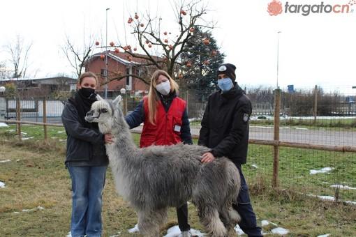 Animali amici dell'uomo e della salute. A Carrù un centro specializzato negli interventi assistiti con animali rivolti ai bambini (VIDEO)