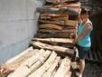 Milena con la legna da ardere prima di essere tagliata