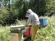 Alessio alle prese con un apiario a Roccaforte Mondovì