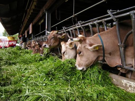 L'importanza dell'alimentazione del bovino da latte, convegno dell'Ara Piemonte