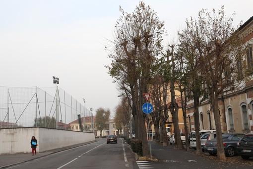 Alba: abbattuto un albero a rischio cedimenti in corso Michele Coppino