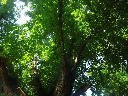 """""""Bra o degli alberi. E se fossero la nostra salvezza?"""": se ne parla all'Associazione Il Fondaco con l'autrice Serena Fumero"""