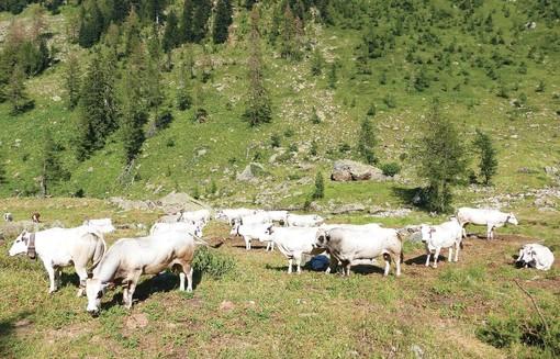 Nuovi lavori nelle aree alpine, presentazione del corso Agenform a Cheese