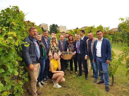 L'Alba del vino fa festa al Dolcetto: sindaco in vigna per i 40 anni della Doc cittadina