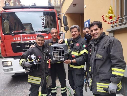 I Vigili del fuoco con il gattino recuperato