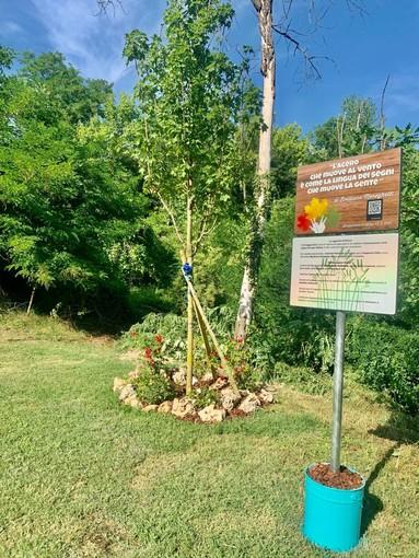 Scaparoni, la comunità sorda pianta un acero per celebrare il riconoscimento della Lis