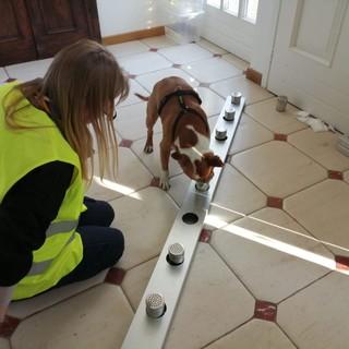 Cani anti-Covid all'aeroporto di Cuneo: è la prima volta in Italia