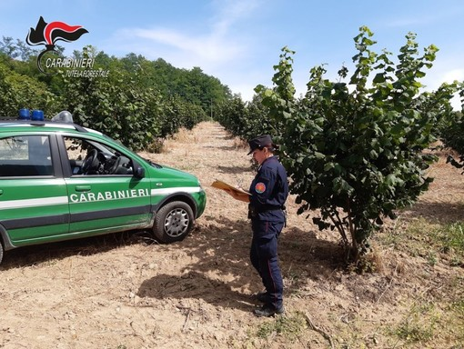 I controlli realizzati dagli uomini del Comando provinciale Carabinieri Forestali