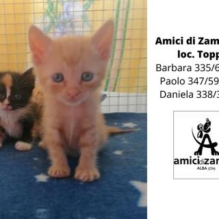 Due gattini orfani cercano una famiglia che li accolga