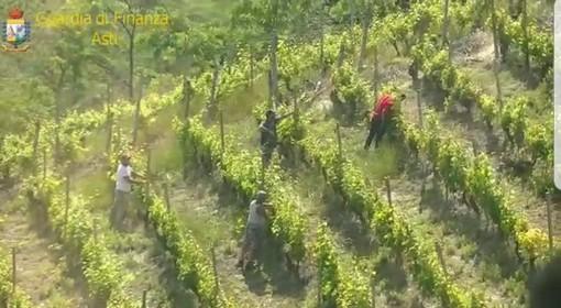 Operazione della Guardia di Finanza contro il caporalato nelle vigne della Valle Belbo (FOTOGALLERY)