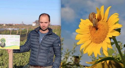 Michele Bergese nell'allevamento con il premio Oscar Green Piemonte di Coldiretti e una chiocciola Helix Aspersa sul fiore di girasole