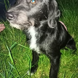La cagnolina ritrovata a Saluzzo