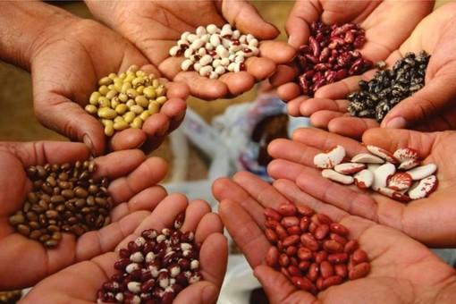 Partito nel monregalese il progetto CaDiBiA per salvaguardare la biodiversità agricola