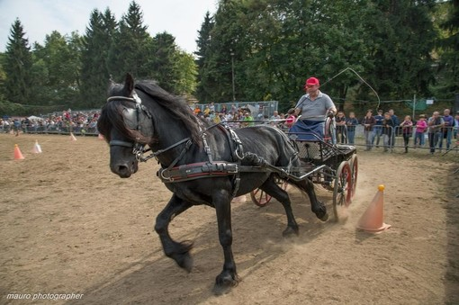 La mostra nazionale del cavallo di Mèrens - FOTO MAURO PIOVANO