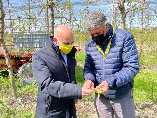 """Gelate, Coldiretti Cuneo chiede aiuto alla Regione: """"Si attivino urgentemente formule di sostegno alle imprese"""""""